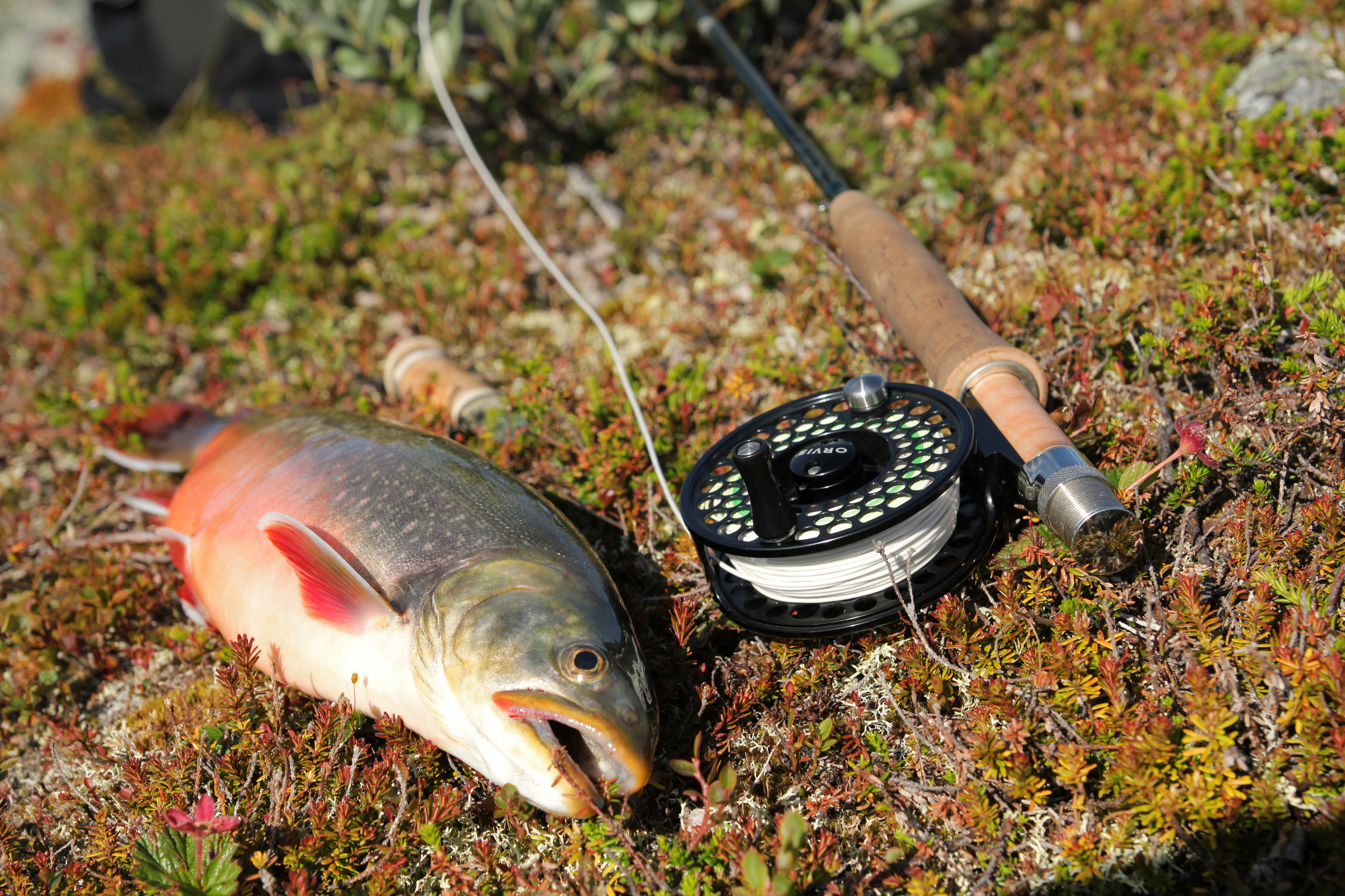 Catching grayling on Tyrolean rod. Tyrolean wand: how to catch 32